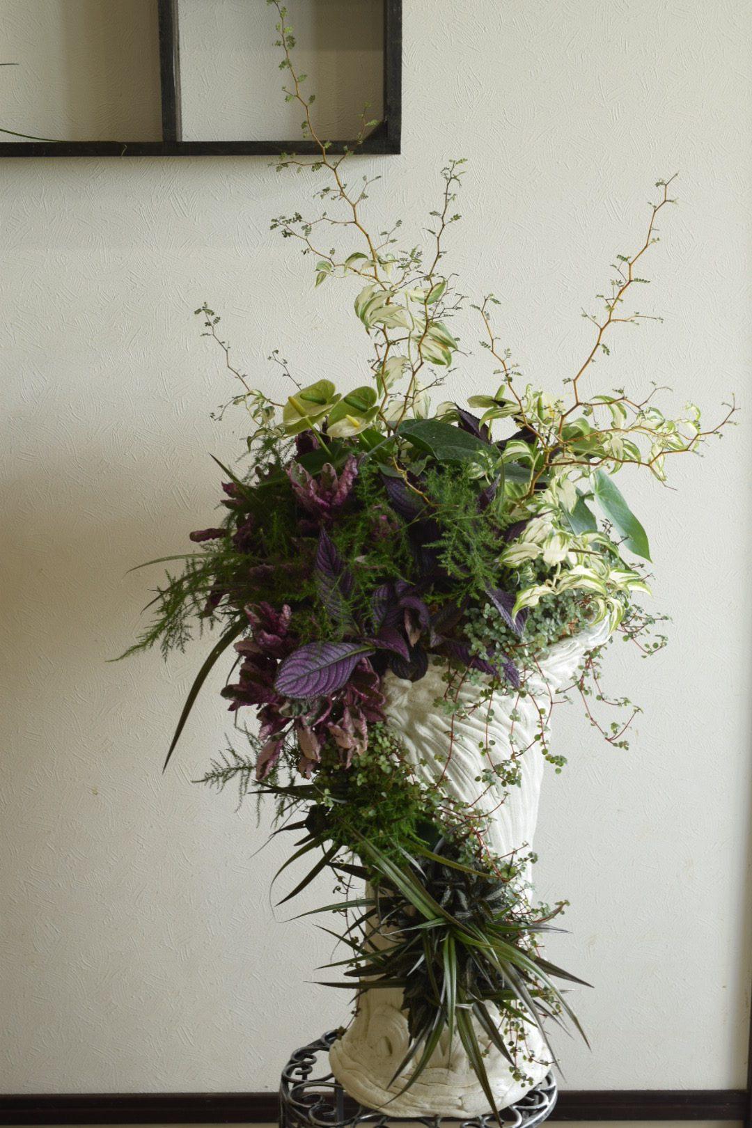 室内用観葉植物